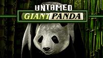 Играть онлайн в автомат Untamed Giant Panda